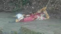جسد فرد چینی پیدا شد