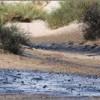 جانوران نادر، قربانیان مالچپاشی در خوزستان